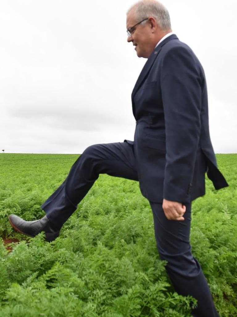 scomo at carrot farm